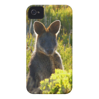 Swamp Wallaby Case-Mate iPhone 4 Case