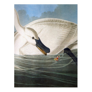 Swan and butterfly postcard
