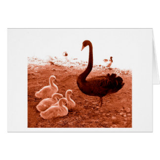 Swan and chicks greeting card