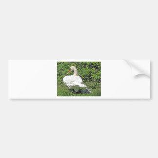 Swan and_cygnets bumper sticker