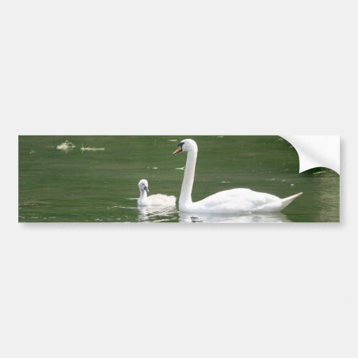 Swan and her Cygnet Bumper Stickers