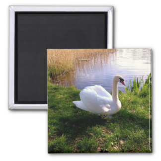 Swan at the Lake,Bird,Animal 2 Inch Square Magnet