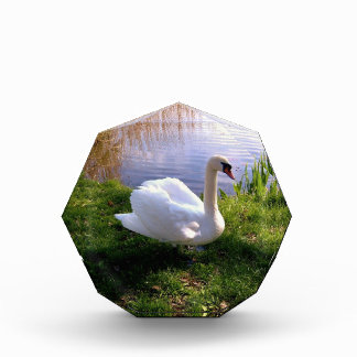 Swan at the lake Bird Animal Summer, Acrylic Award