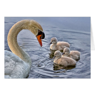 Swan & Babies Greeting Card