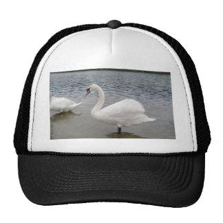 Swan Beautiful Wallpaper Hats