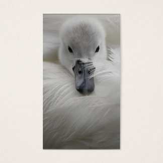 Swan, Beautiful White Feathers, Beauty Comfort Business Card