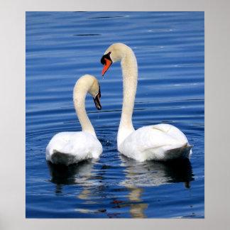 Swan Bird Soul Mates Poster Photograph