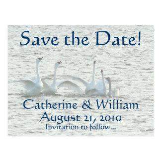 Swan Birds Animals Wildlife Save the Date Postcard