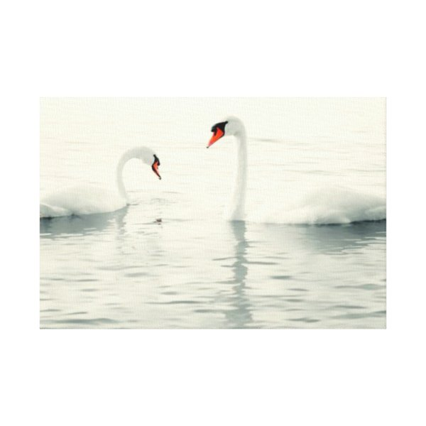 Swan Birds Water Modern Wall Art