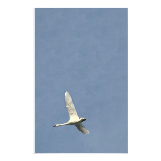 Swan Birds Wildlife Animals Stationery