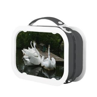 Swan Boats Lunchbox