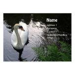 Swan - business card