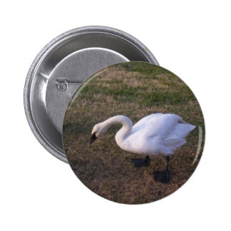 Swan Pinback Buttons