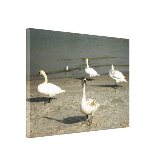 Swan Canvas Gallery Wrapped Canvas
