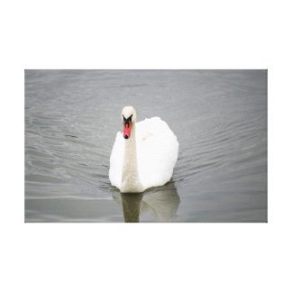 Swan Stretched Canvas Prints