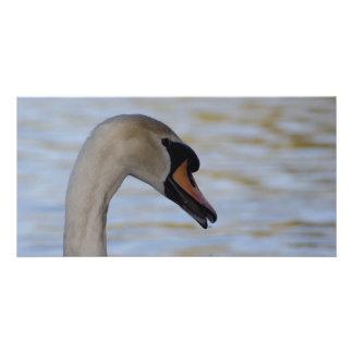 Swan Closeup Note Cards Photo Card Template