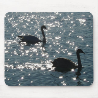 Swan couple in sunlight mouse pad