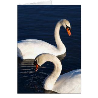 Swan Duet Card