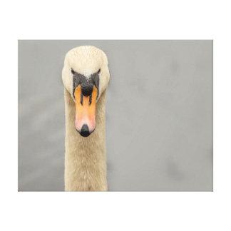 Swan face canvas print