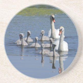 Swan Family Coaster coaster