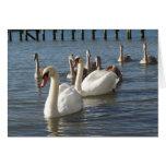 Swan Family Greeting Card