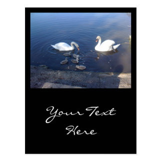 Swan Family Post Cards