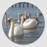 Swan Family Round Stickers