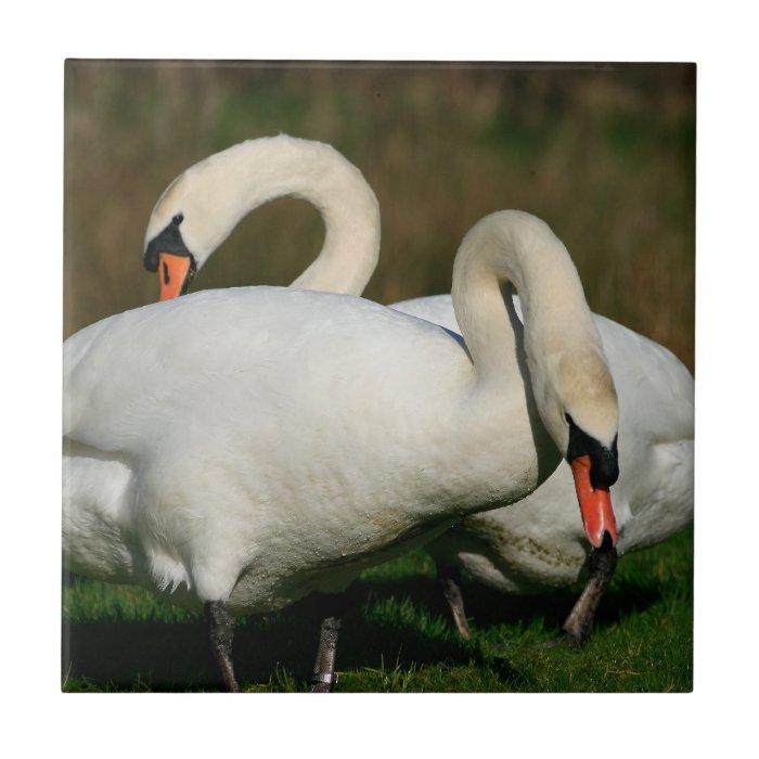 Swan Family Tile