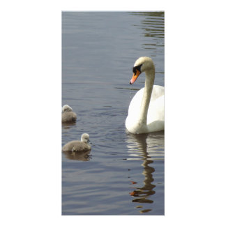 Swan Family with mom and ducklings or cygnets Custom Photo Card