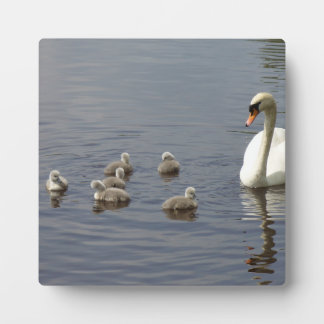 Swan Family with mom and ducklings or cygnets Plaque