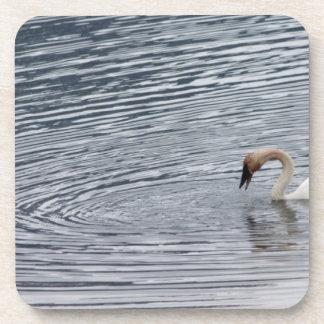 Swan Feeding Coaster