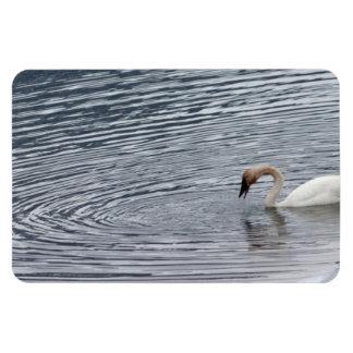 Swan Feeding Magnet