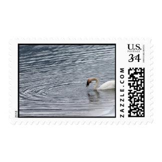 Swan Feeding Postage