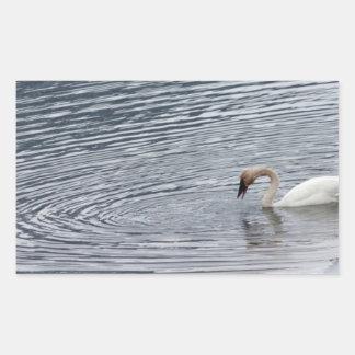 Swan Feeding Rectangular Sticker