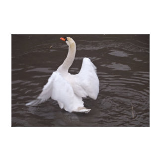 Swan Flapping Wings Gallery Wrapped Canvas