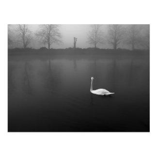 Swan, foggy morning post card