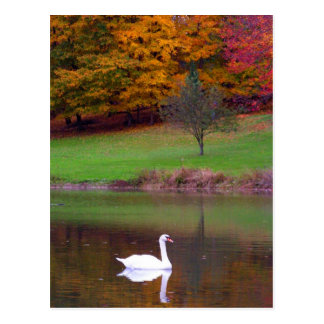 Swan in autumn postcard