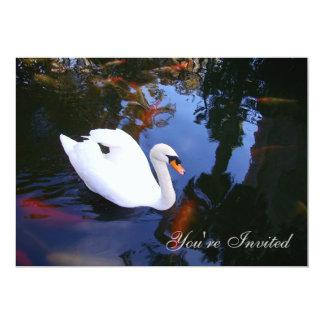 Swan in Coy pond Card