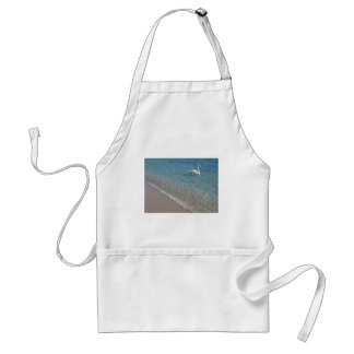 Swan in crystal clear shallow sea water aprons