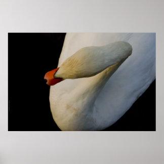 swan in dark 2 poster