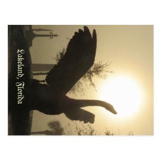 Swan in Flight Lakeland Florida Foggy Morning Postcards