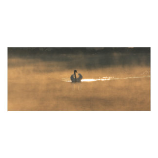 swan in the fog rack card
