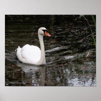 Swan in Versailles Print