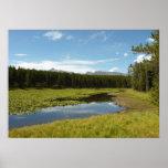 Swan Lake I at Grand Teton National Park Poster