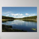 Swan Lake II at Grand Teton National Park Poster