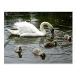 Swan Lake Post Card