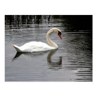 Swan Lake Post Cards