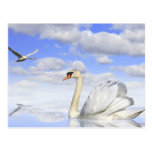 Swan lake postcards