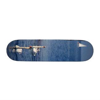 Swan Lake Skate Board Decks