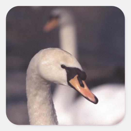 Swan Lake Square Sticker